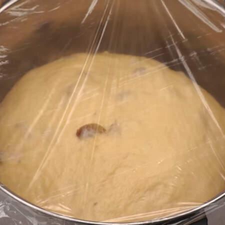 Кастрюлю накрываем пищевой пленкой, чтоб не заветривалось тесто и ставим в теплое место подходить. Можно возле теплой батареи  или в слегка теплую духовку.